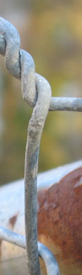 A twisted bit of wire from a chainlink fence with a bit of a rusty crossbar just behind it. An extremely blurry forest serves as the backdrop.